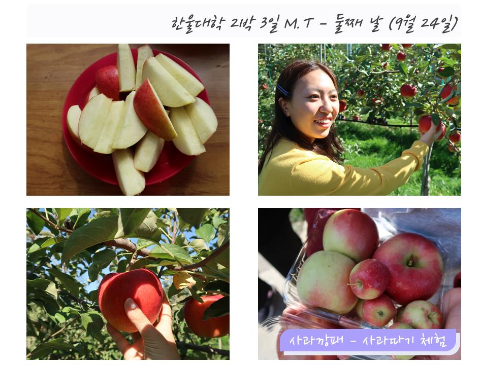 한울대학 2박3일 M.T - 둘째날 (9월24일)왼쪽상단: 사과 사진오른쪽상단: 한 이용자가 사과나무의 사과를 잡고 찍은 사진왼쪽하단: 사과나무의 사과를 손으로 잡고 있는 모습오른쪽하단: 직접 딴 여러개의 사과 사진 (사과깡패 - 사과따기 체험)